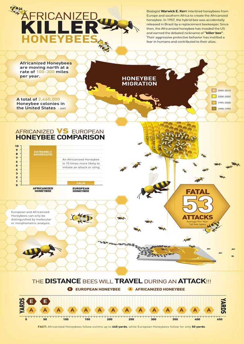 Learn about the spread of the killer bees in the US