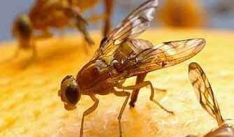 how to get rid of fruit flies easy video included, Bathroom decor