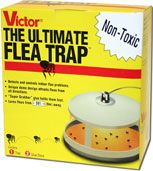 Flea Trap Intro Image