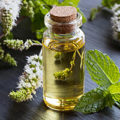 Peppermint Oil For Fleas – Is It Safe For Your Dogs And Cats?