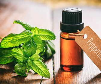 Picture of DIY methods for treating fleas with peppermint oil
