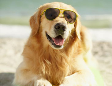 Picture of a dog on the beach sand