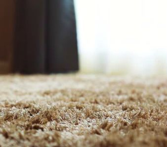 Picture of a carpet with fleas hidden inside
